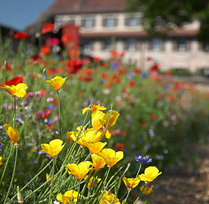 Picture: Flowers at Cadolzburg Garden