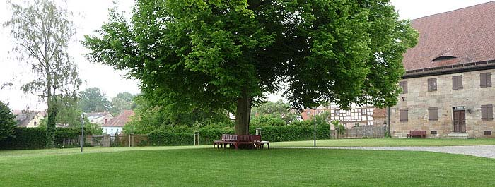 Picture: Linden tree with surrounding seat